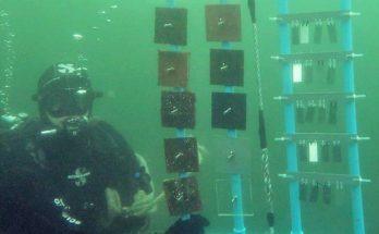 experimentos en el mar