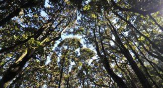 Celebran 30 años del estudio ecológico en Fray Jorge destacando sus aportes y nuevas investigaciones