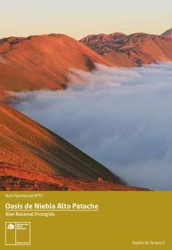 oasis de niebla alto patache