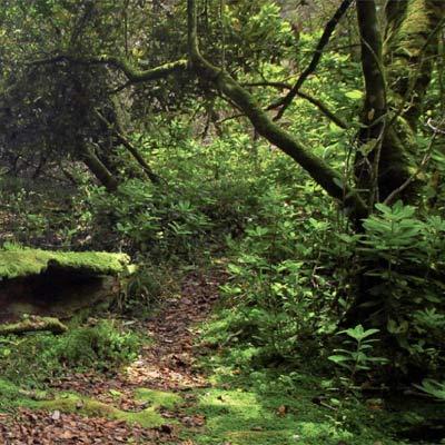 parque nacional fray jorge bosque