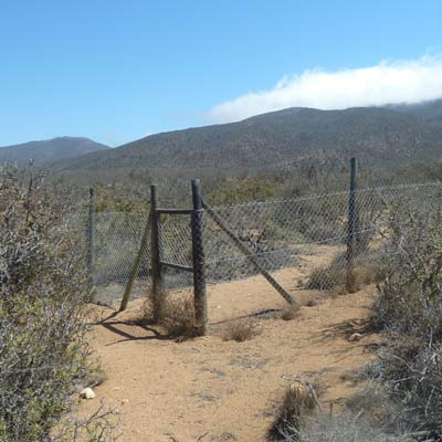 parque nacional fray jorge matorral