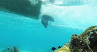 Nemo se irrita, se estresa y se pone agresivo con el ruido de los motores de los barcos
