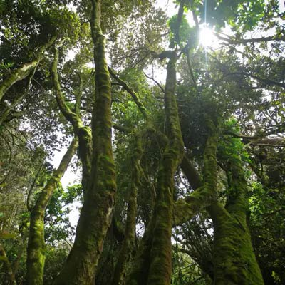 parque bosque fray jorge